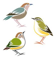 Stylized Birds - Rusty-naped Pitta, Rock Wren, Rifleman