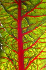 Beet leaf texture