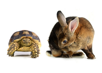 rabbit and  turtle  on a white background