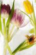 canvas print picture - Tulpen - tiefgekühlt