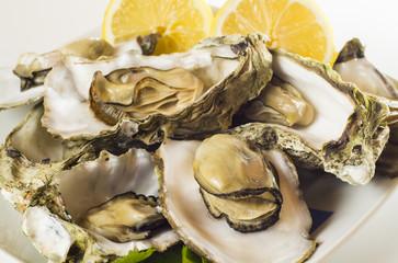 Detalle de ostras