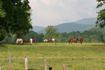 Horses in the Valley