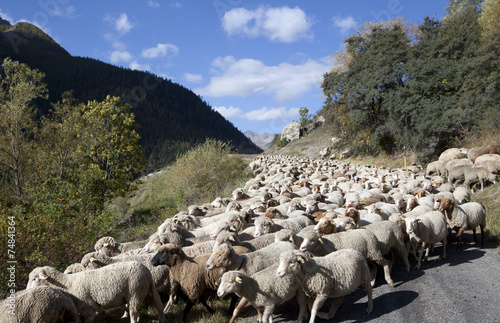 Papiers peints Sheep Saison Berger, Alpes de hautes Provence