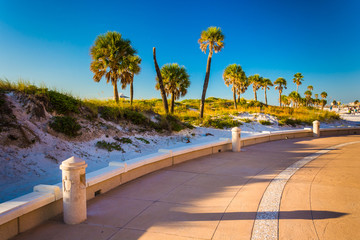 Sand dunes and palm trees along a path in Clearwater Beach, Flor