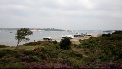 English purple heather view to Brownsea Island Poole Dorset