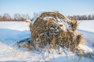 hay in the snow