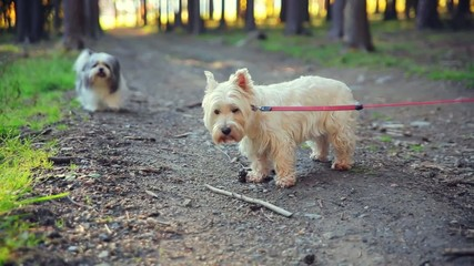 Dogs on a leash in the woods