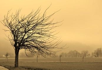 Herbst im Dreisamtal