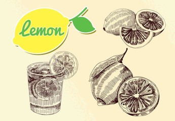 lemon citrus vector set