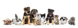 Fototapeta set of pets