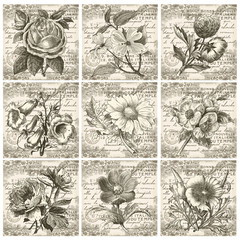 Collection de cartes postales - fleurs