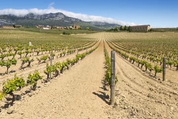 Vineyard with Paganos as background, Rioja Alavesa (Spain)