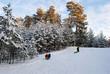 Rodelberg im Wald