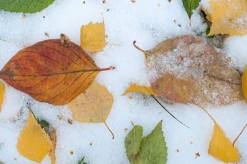 Leaves autumn snow. texture