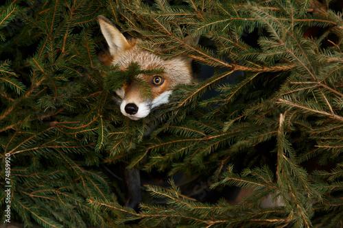 Poster Fuchs im Dickicht