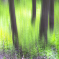 Abstract spring forest tree