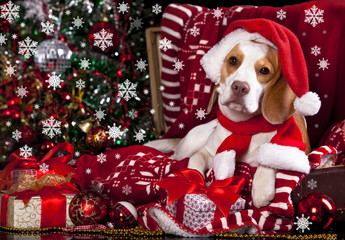 beagle dog  in a Santa Claus hat and present
