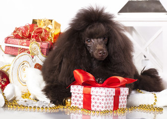 puppy christmas toy poodle