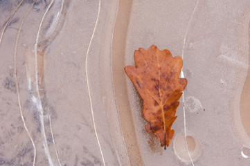 puddle of ice. Oak leaf in autumn