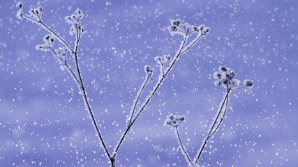 snow falling on a frozen plant (looping)