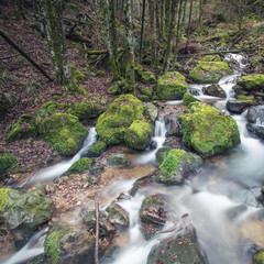small brook in black forest, Germany