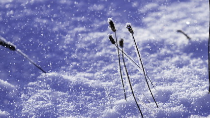 snow falling on a frozen plant