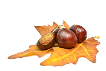 chestnut chesnut autumn yellow leaf background