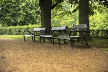 Stylish bench in autumn park
