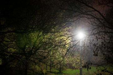 Creepy park at night with illumination