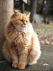 座る長い毛の猫