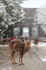 雪景色 鹿と東大寺南大門