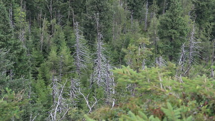 Dead trees. Co2 and So2 emission. Acid rains. Air pollution