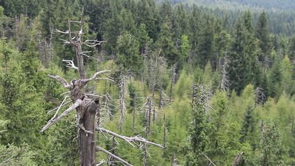 Dead trees. Co2 and So2 emission. Acid rains.