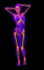 3d render medical illustration of the human skeleton