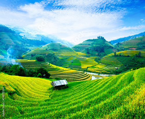 Rice fields on terraces in vietnam - 74875394