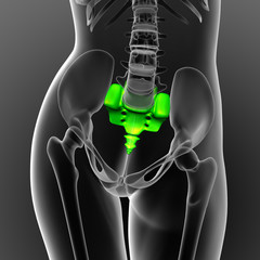 3d render medical illustration of the sacrum bone