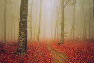 Elegant trail into foggy woods during autumn