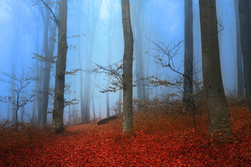 Beautiful romantic forest during a foggy day