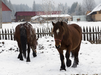Horses in snow at a farm
