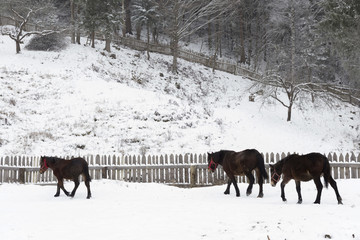 Horses in a farm during winter