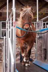 Pferd auf Laufband