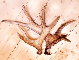antlers deer horns elk wood