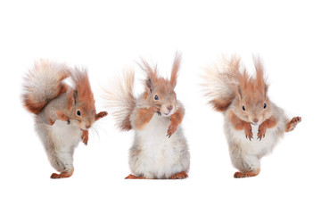 three squirrel