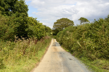 small country road near Mevagissey, Cornwall