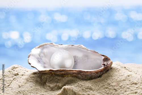 Leinwandbild Motiv Pearl oyster in the sand.