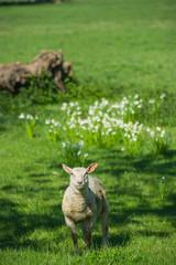 Cute in spring in field