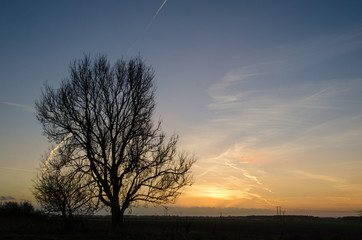 Big lone tree