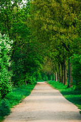beautiful green forest.  forest park road view