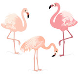 Fototapety Flamingos