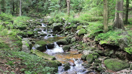 Beautiful mountain brook with a mossy rocks in the forest